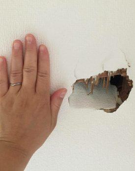 壁穴補修に行って参りました。