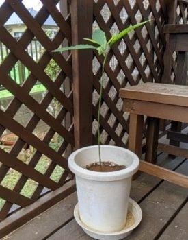 天然木と人工(樹脂)木のウッドデッキはどう違う?特徴と選び方